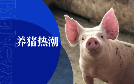 大廠齊養豬 網易味央運用RFID耳標技術實時監測豬狀況