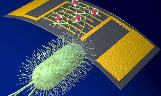 美研究人员利用蛋白质纳米线研发高敏感度化学传感器