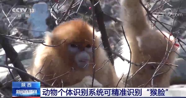 我国研发出动物个体识别系统:精准识别猴脸 准确率95.6%