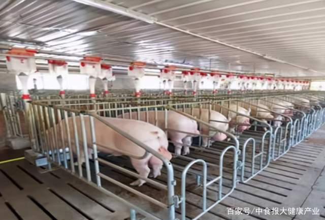 """生猪行业有了新变量 华为等科技大厂为""""智慧养猪""""赋能"""