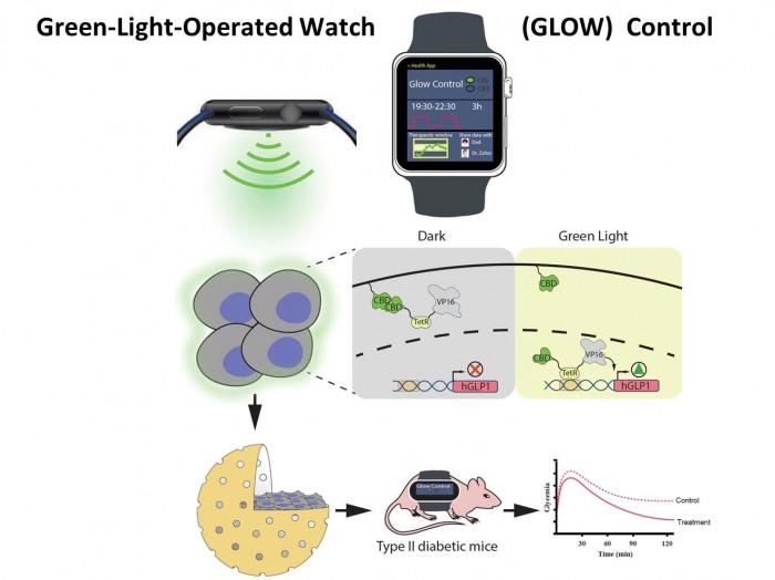 研究人员用智能手表激活基因以控制胰岛素分泌