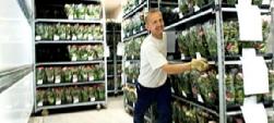 RFID用于跟踪、认证运输花卉和植物的手推车