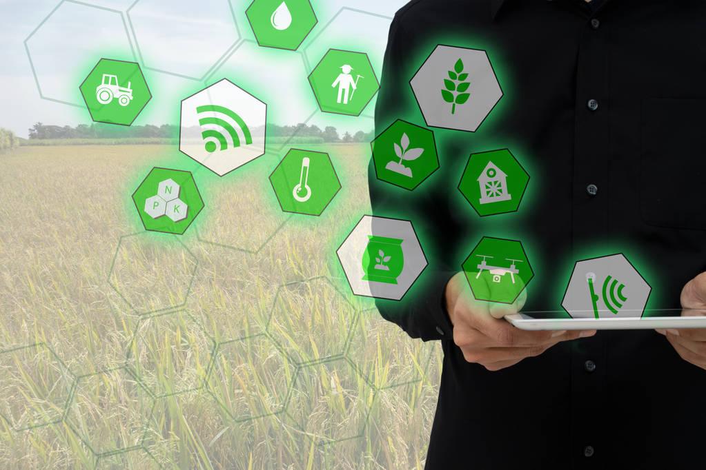 人工智能在印度农业转型中的作用