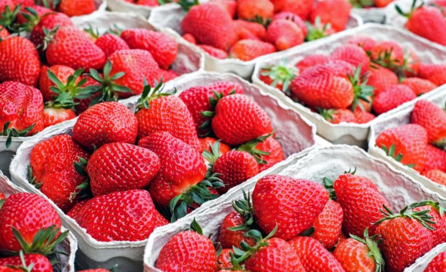 草莓1.png